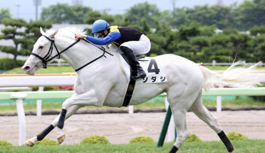 白い競走馬ソダシを語る。血を繋ぐロマンとストーリーに人は課金し続ける